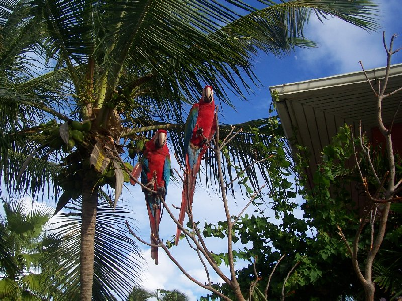 Parrots at the Dolphin Discover Center in Prospect Reef Port, British Virgin Islands