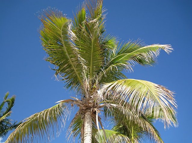 Palm trees on the beach in Anguilla, Anguilla