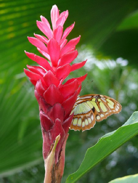 Pictures at the Butterfly Farm in Philpsburg, Philipsburg Netherlands Antilles
