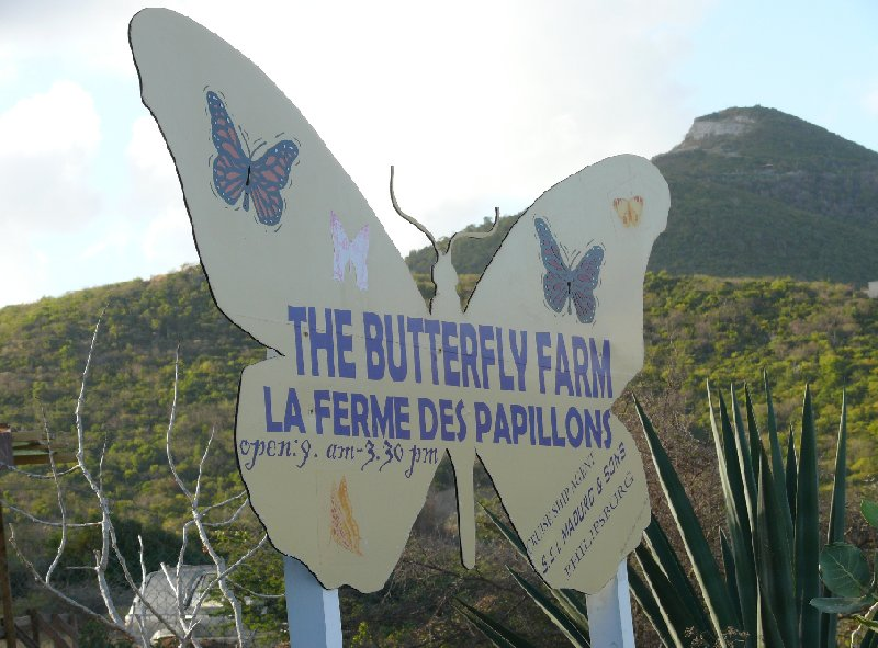 The Butterfly Farm in Philipsburg, Sint Maarten, Netherlands Antilles