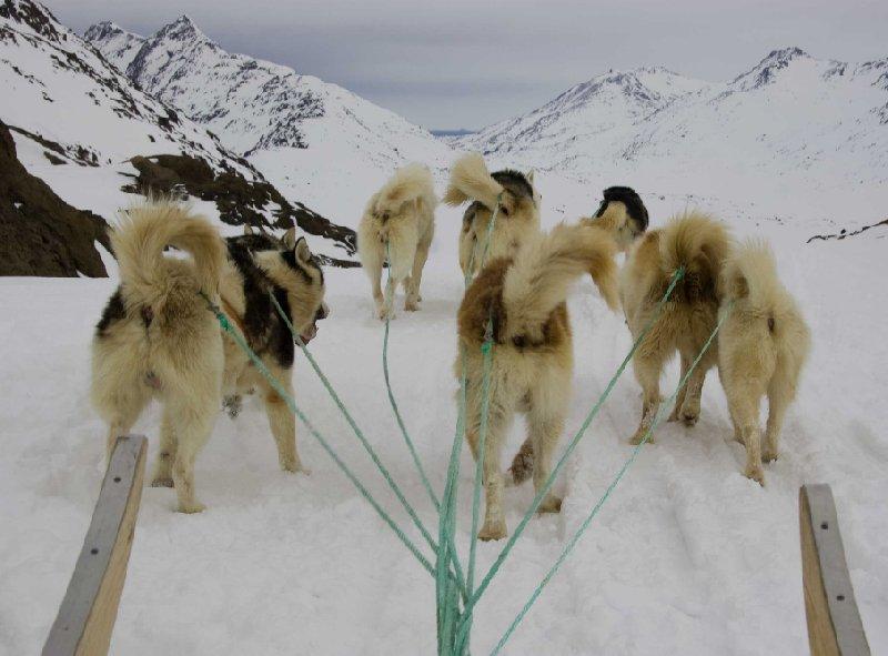 Husky ride in Tasiilaq, Greenland, Tasiilaq Greenland