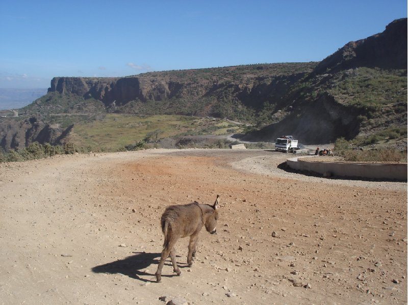 Gondar Ethiopia Little donkey outside Gondar