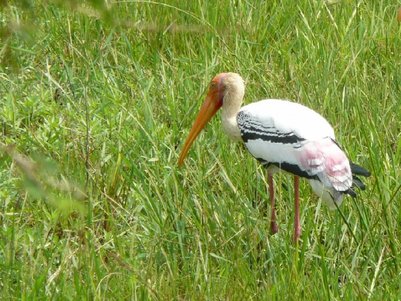 Birdlife in the Yala National Park, Sri Lanka, Sri Lanka