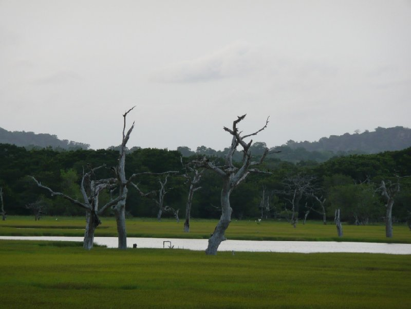 Photos of the Yala National Park, Sri Lanka, Sri Lanka