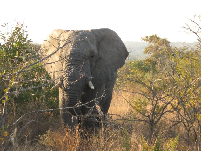 Photos of an elephant in the Mkhaya Game Reserve, Swaziland, Swaziland