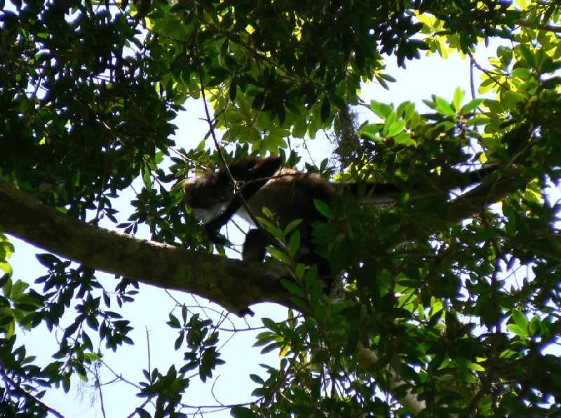 Wildlife spotting in Tikal, Guatemala, Guatemala