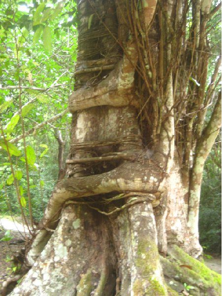 Photos of the trees around Tikal, Guatemala