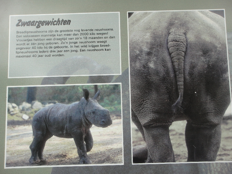 Photo Pictures of the Arnhem Zoo Holland Station