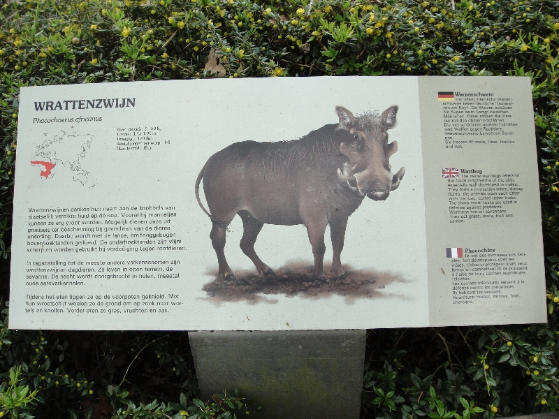 Photo Pictures of the Arnhem Zoo Holland different