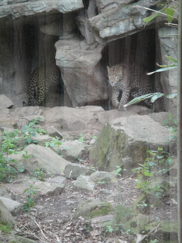 Photo Pictures of the Arnhem Zoo Holland enough