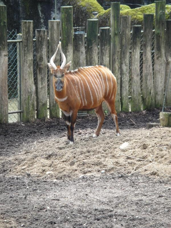 Photo Pictures of the Arnhem Zoo Holland unfortunately