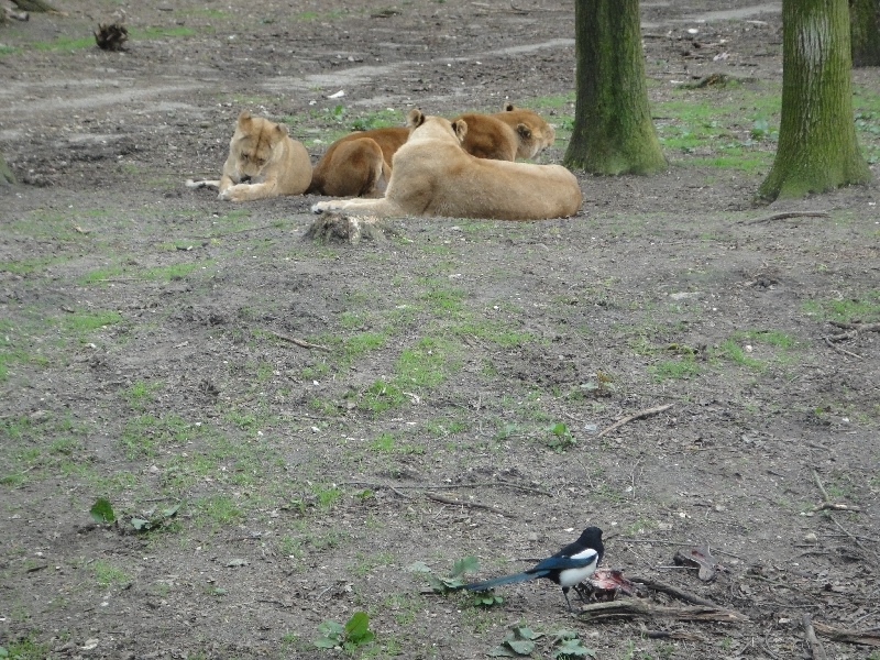Photo Pictures of the Arnhem Zoo Holland inside