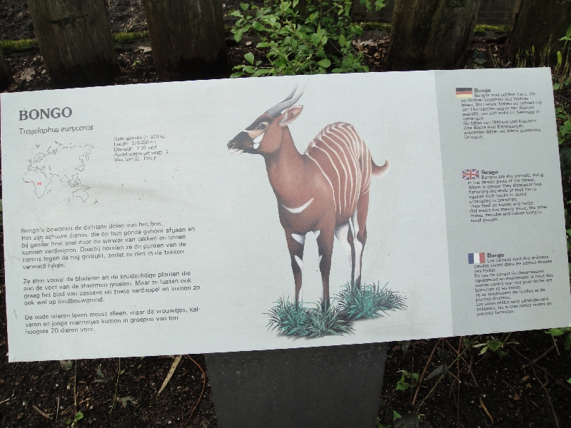 Photo Pictures of the Arnhem Zoo Holland decided