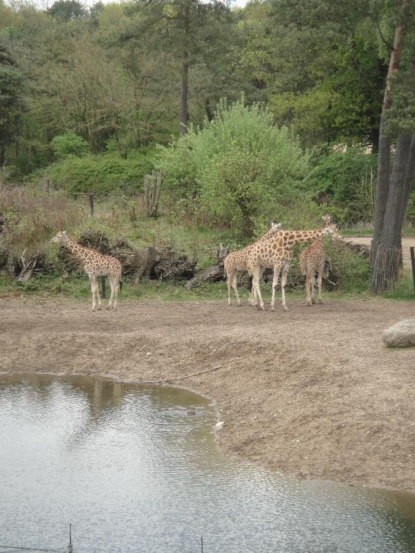 Photo Pictures of the Arnhem Zoo Holland Searching