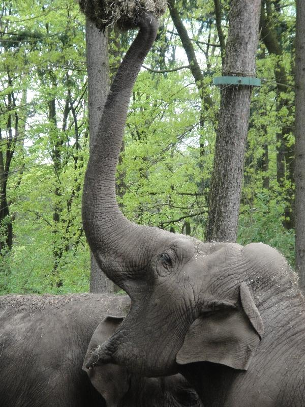 Photo Pictures of the Arnhem Zoo Holland online
