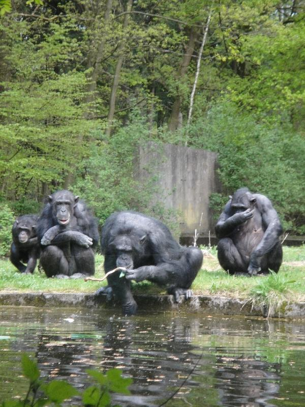 Photo Pictures of the Arnhem Zoo Holland followed