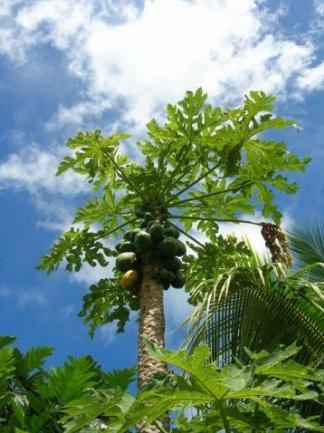 Apia Samoa Diary Picture