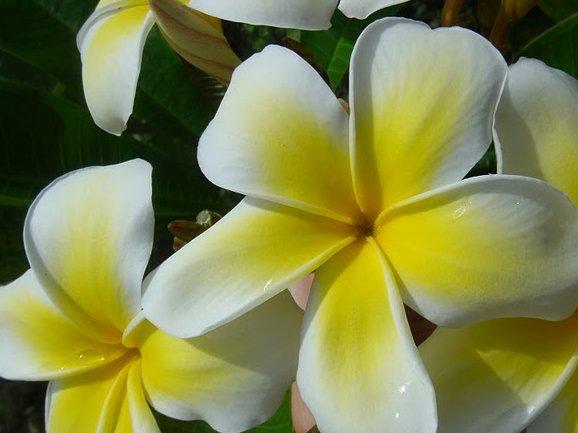 Apia Samoa Blog Sharing