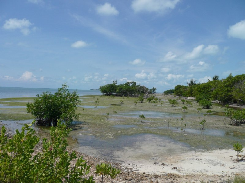 From Belize City to Caye Caulker Island Blog Pictures