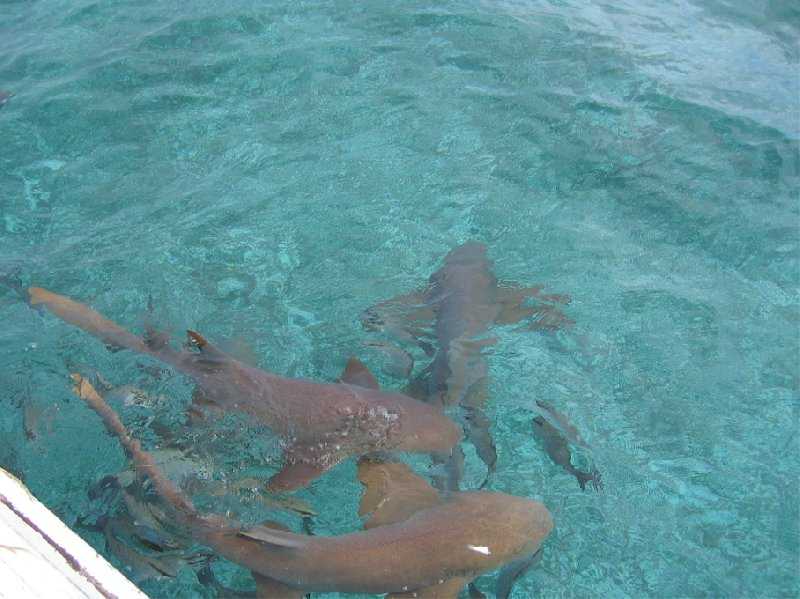 From Belize City to Caye Caulker Island Blog Photo