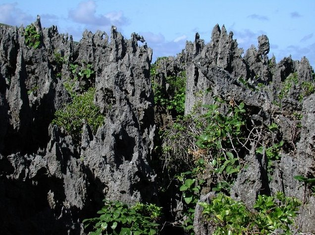 The Landscapes of Niue Island Alofi Travel Adventure