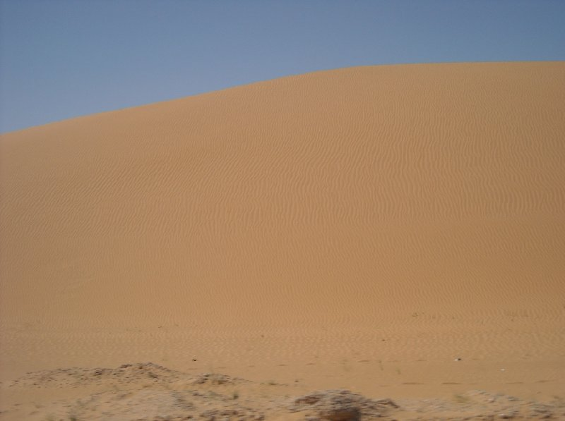 Desert camel ride to the Terjit Oasis Mauritania Vacation Picture