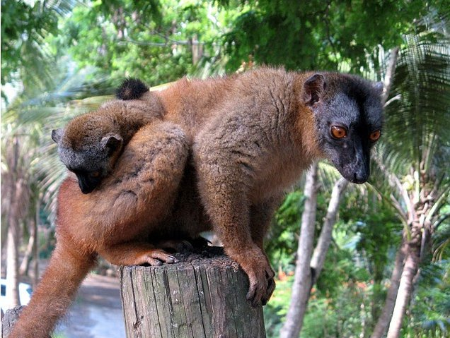 Wildlife pictures Mayotte Island Mamoudzou Trip Experience