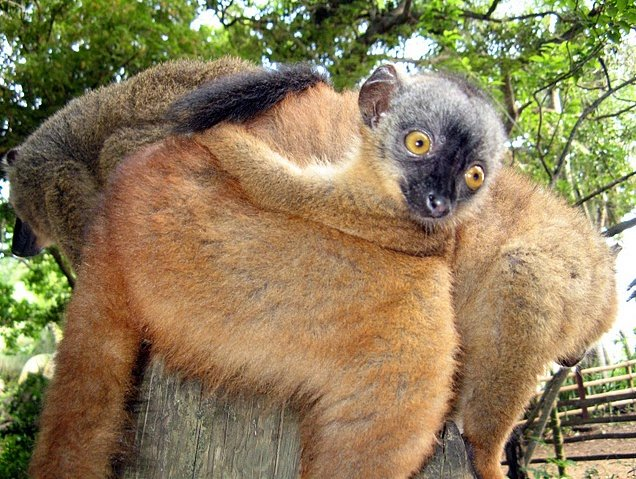 Wildlife pictures Mayotte Island Mamoudzou Vacation Diary