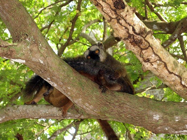 Wildlife pictures Mayotte Island Mamoudzou Picture