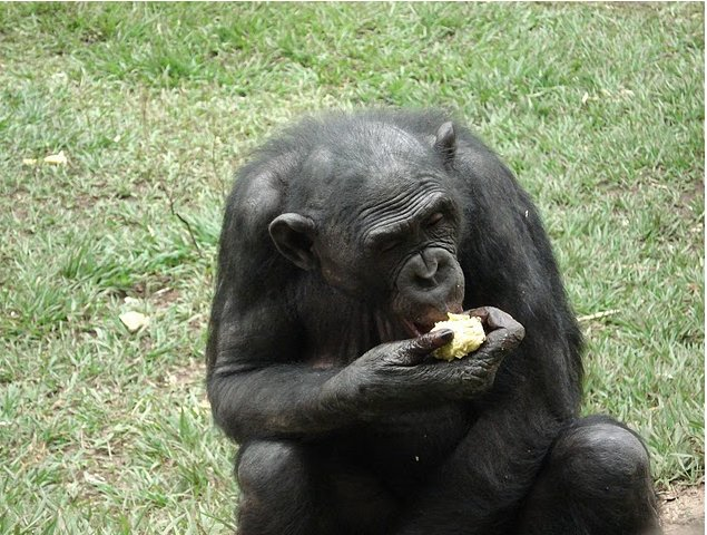 Photo Lola Ya Bonobo sanctuary near Kinshasa Chutes
