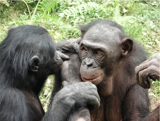 Photo Lola Ya Bonobo sanctuary near Kinshasa outside