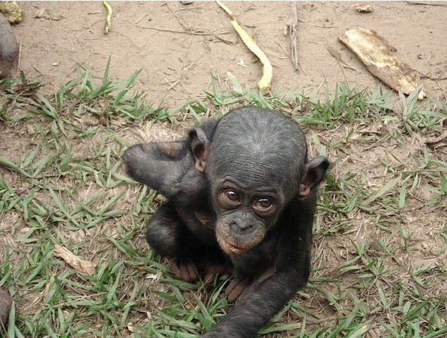 Photo Lola Ya Bonobo sanctuary near Kinshasa western