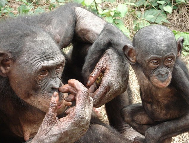 Photo Lola Ya Bonobo sanctuary near Kinshasa incredible