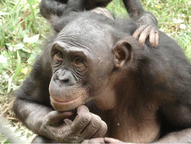 Lola Ya Bonobo sanctuary near Kinshasa Democratic Republic of the Congo Travel Adventure