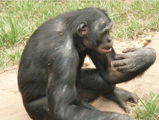 Photo Lola Ya Bonobo sanctuary near Kinshasa beautiful