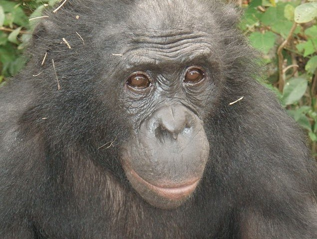 Lola Ya Bonobo sanctuary near Kinshasa Democratic Republic of the Congo Vacation Tips