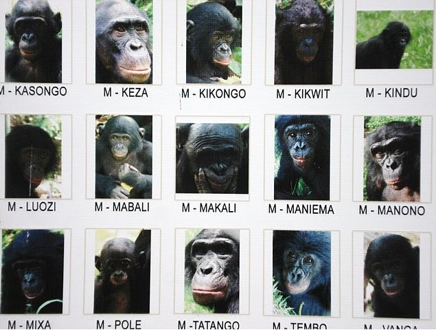 Photo Lola Ya Bonobo sanctuary near Kinshasa humans