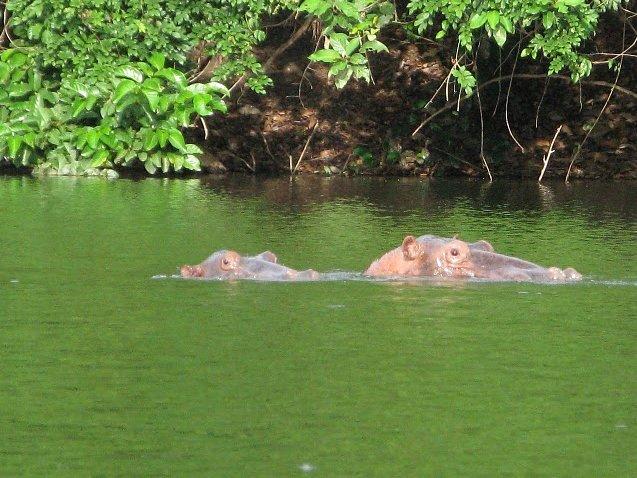 Outamba-kilimi national park Kamakwie Sierra Leone Review
