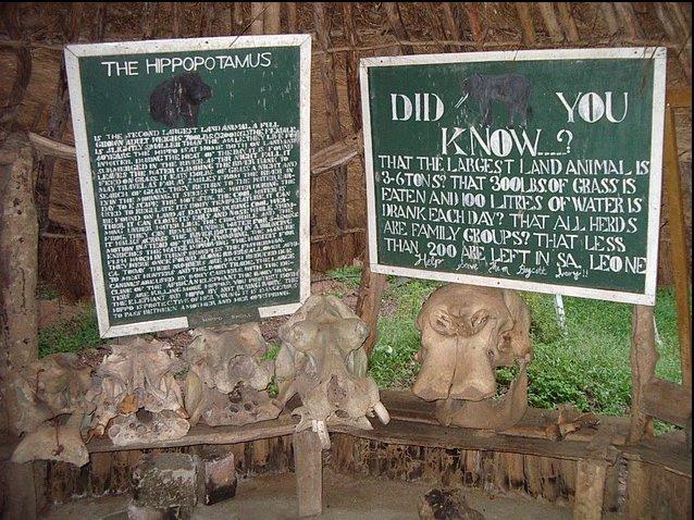 Outamba-kilimi national park Kamakwie Sierra Leone Picture