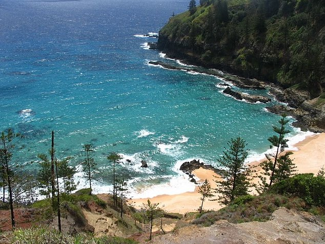 Norfolk Island pine tree tours Kingston Trip Guide