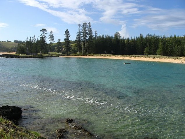 Norfolk Island pine tree tours Kingston Diary Picture