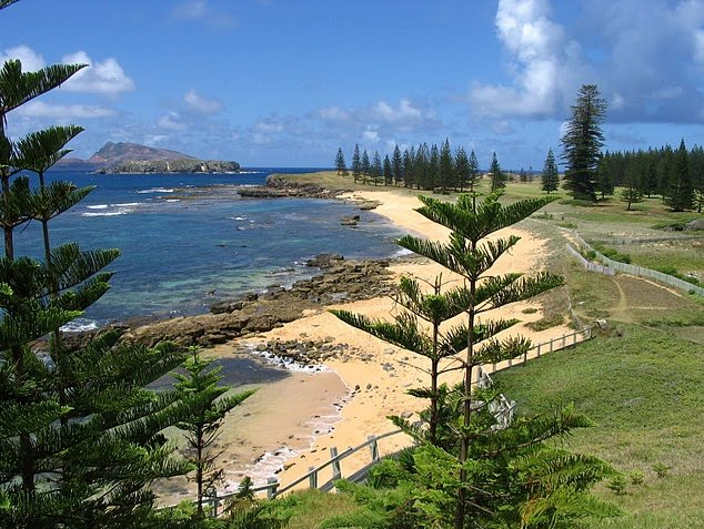 Norfolk Island pine tree tours Kingston Trip Photo