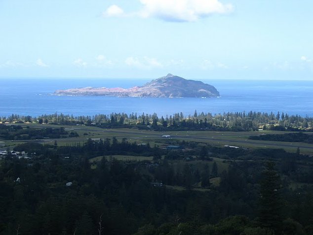Norfolk Island pine tree tours Kingston Review