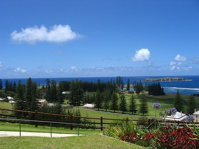 Norfolk Island pine tree tours Kingston Travel Photographs