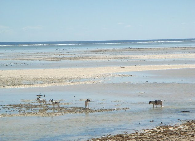 Photo Kiribati Island pictures Tarawa