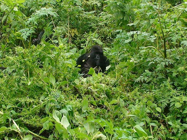 Photo Rwanda Volcanoes National Park Virunga