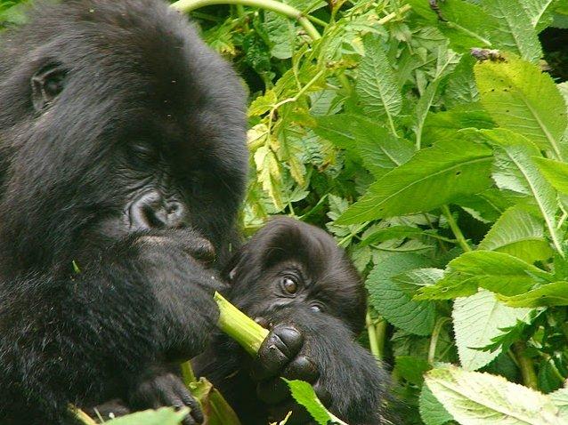 Rwanda Volcanoes National Park Ruhengeri Travel Pictures