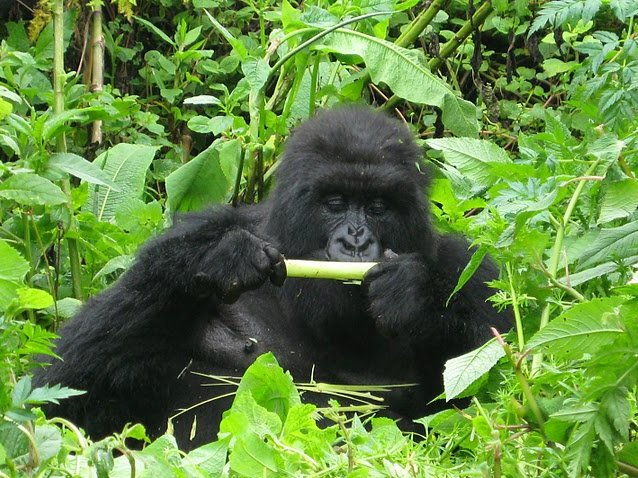 Rwanda Volcanoes National Park Ruhengeri Trip Photo