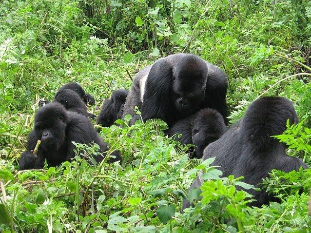 Ruhengeri Rwanda Trip Picture