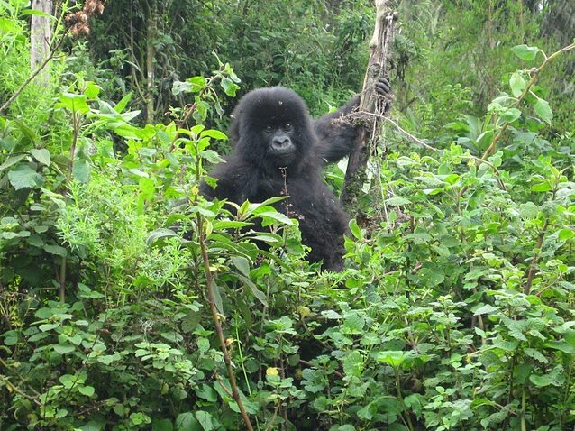 Rwanda Volcanoes National Park Ruhengeri Review Photo